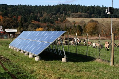 Solar array and goats - Missdee's French Alpine Dairy Goats